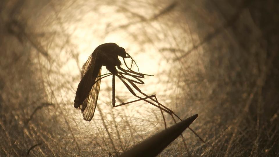Rare Mosquito Disease