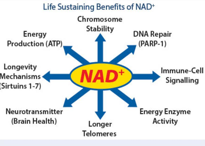 life sustaining benefits of nad